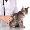Ветеринарные клиники в Вагае